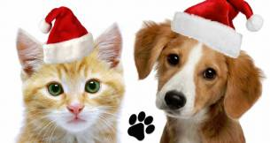 Jingle Bells - Perros y gatos